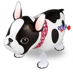 Walking balloon French Bulldog